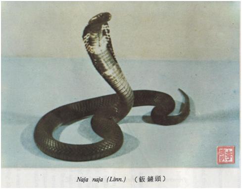 Guia Ilustrado de Cobras Venenosas IV