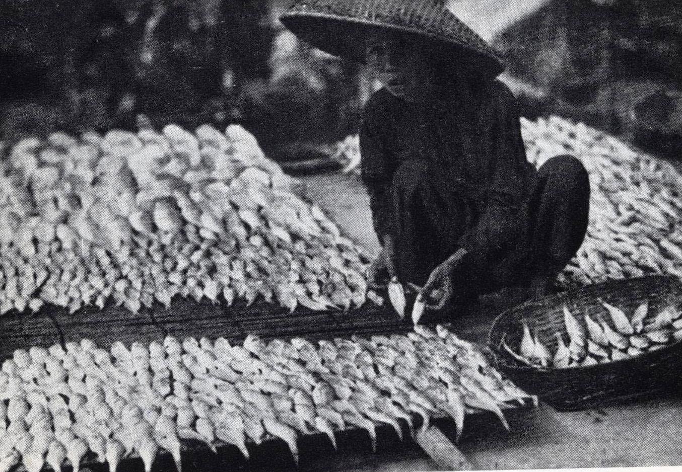 Postal c. 1965 Seca do peixe salgado