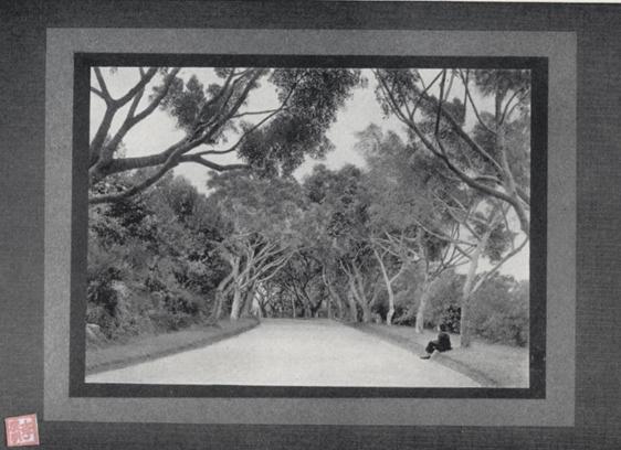 Souvenir de Macau 1910 Estrada da Flora