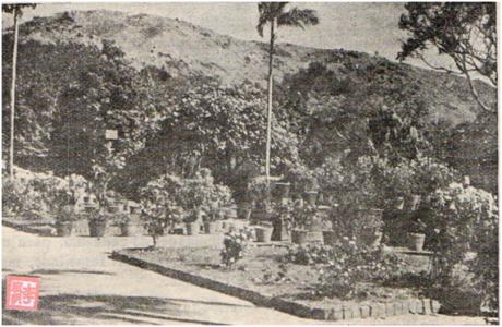 MACAU B.I. I-14 28FEV1954 - ILHA DA TAIPA II