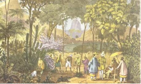 medico-e-saude-jardim-botanico-rio-de-janeiro-iii